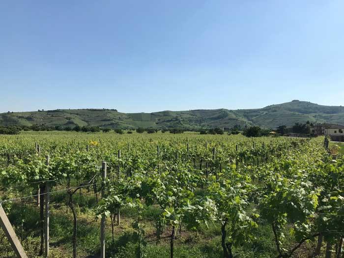 wijngaarden-soave
