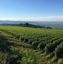 Wijngaard van Sandro de Bruno
